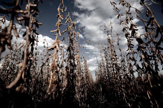 Mato Grosso: Comitê organiza ativismo contra agrotóxicos