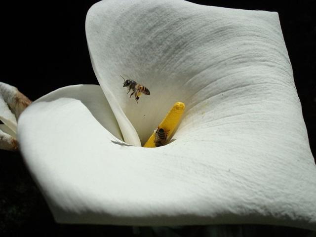 Europa suspende uso de pesticidas nocivos às abelhas