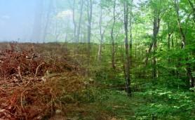 codigo-novas-mentirinhas-reflorestamento-manchete