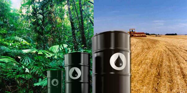 São Paulo: nada de royalties para o meio ambiente