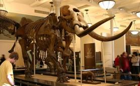 Foto-1-Mammut