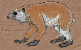flacourt-fauna-perdida-madagascar-megaladapis-edwardsi