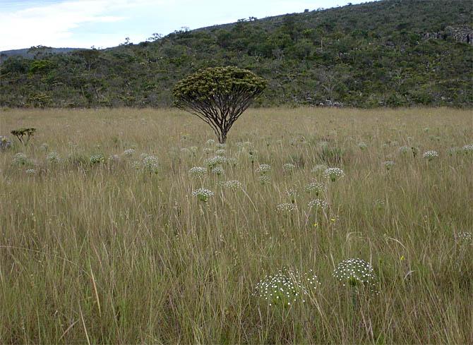 A beleza do Cerrado Brasileiro