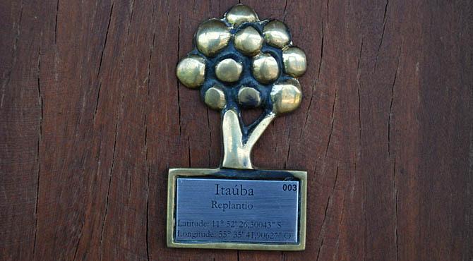 O Ibama doou madeira apreendida para a construção da sede da Embrapa em Sinop. Para cada coluna de madeira recebida, plantou-se uma espécie local. Clique nas fotos abaixo para ampliar. Fotos: Fabio Pellegrini