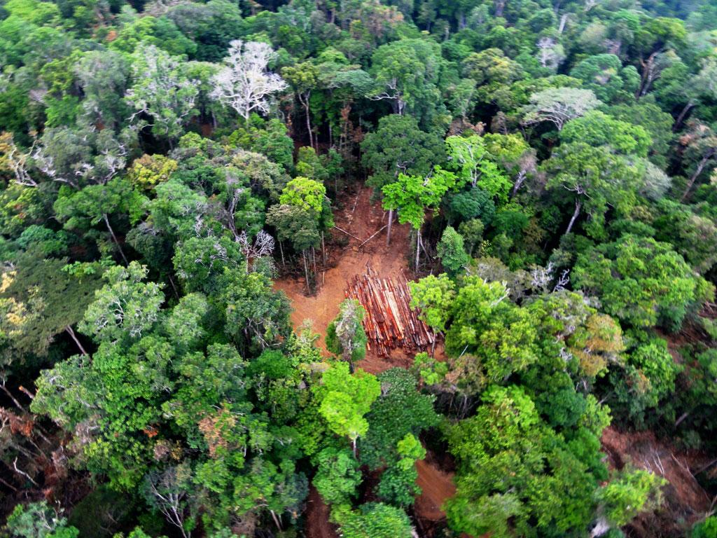 Maranhão: o ataque a Rebio Gurupi e às terras dos Awá Guajá