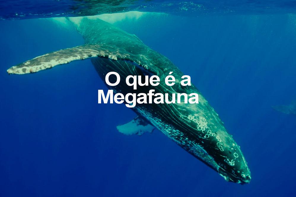 O que é a Megafauna