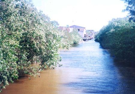 Dez manguezais no Espírito Santo