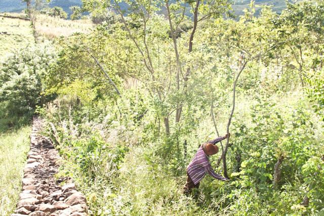 A agroecologia quer criar raízes no semiárido