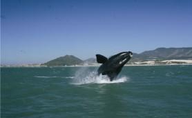salto-baleia