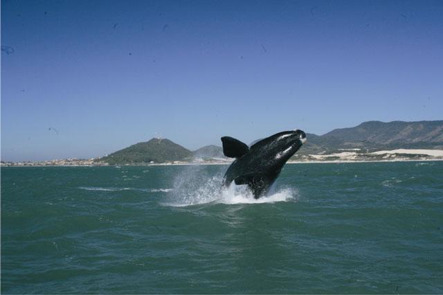 Turismo ecológico é a nova indústria das baleias