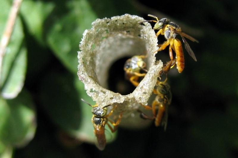 Produção de mel de abelha nativa começa a ser comercializada