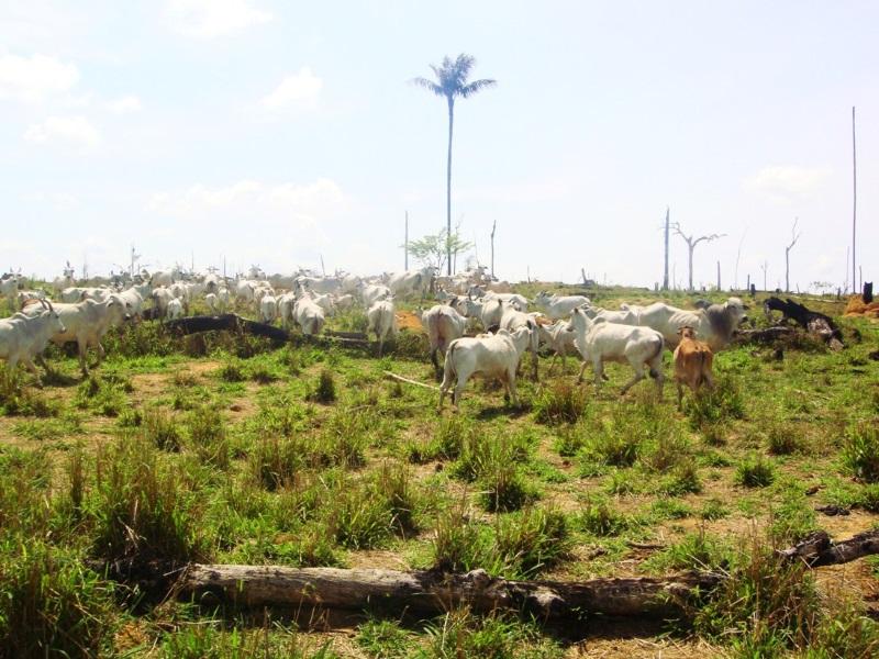 Imazon: desmatamento dispara em setembro