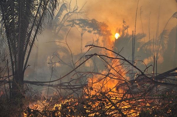 Políticos que reduziram proteção de florestas tentam reeleição
