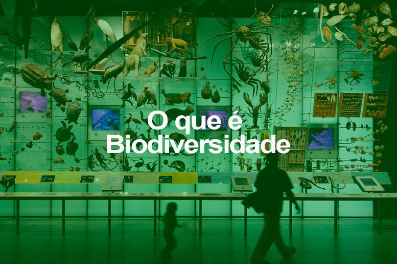 O que é Biodiversidade