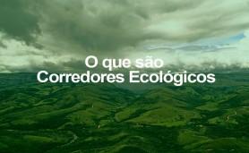 o-q-sao-corredores-ecologicos