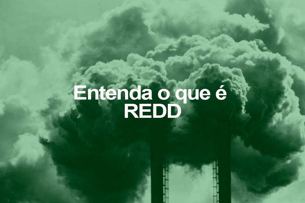 Entenda o que é REDD