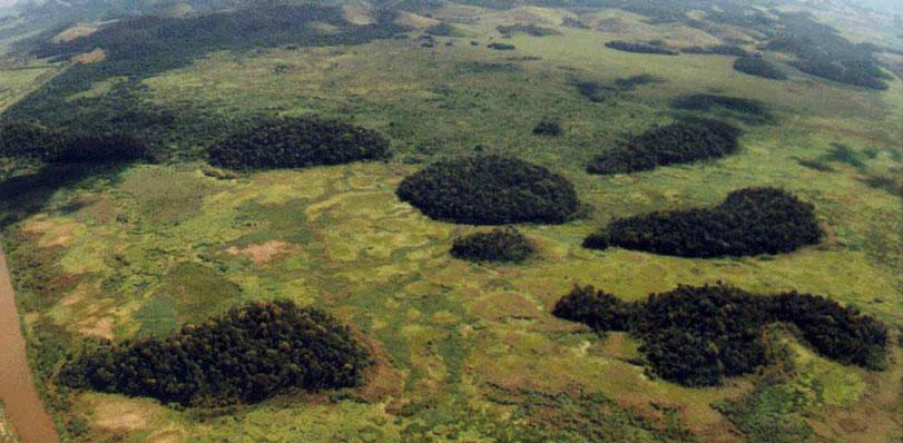 Resultado de imagem para reservas ecologica isolamento