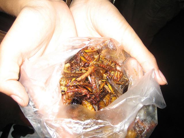 Vamos comer insetos?