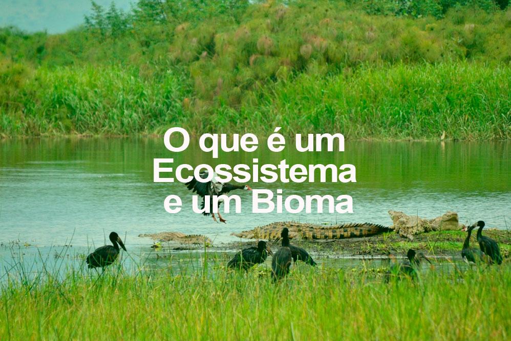 O que é um Ecossistema e um Bioma