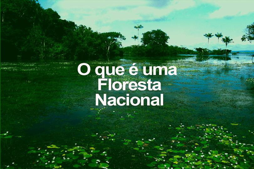 O que é uma Floresta Nacional