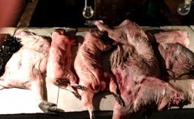 31072015-carne-peixe-boi