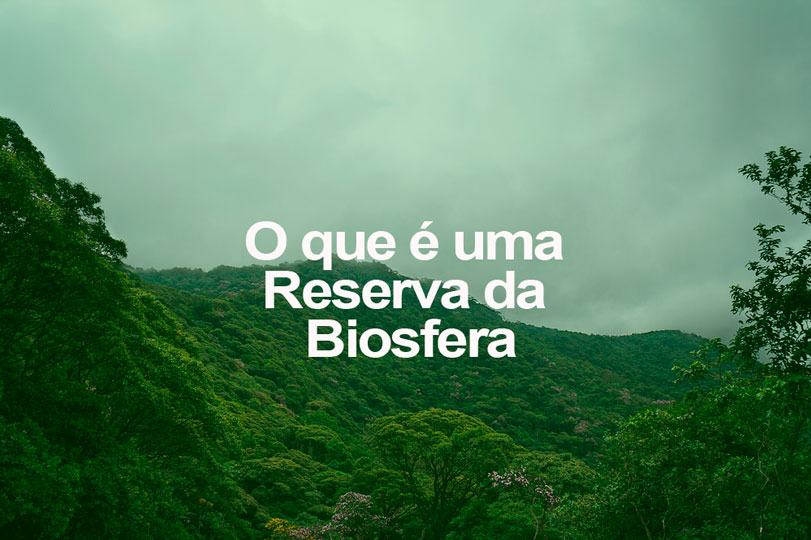 Mata Atlântica, a primeira Reserva da Biosfera do Brasil. Foto: