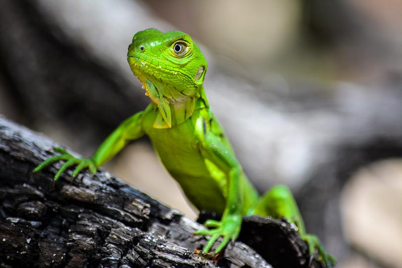 Menos da metade dos brasileiros sabe explicar o que é biodiversidade