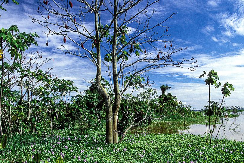 Desmatamento avança na Reserva Extrativista do Alto Juruá