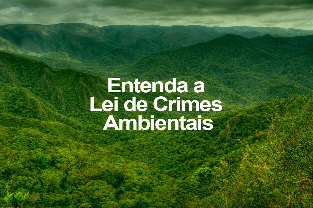 Entenda A Lei De Crimes Ambientais Oeco