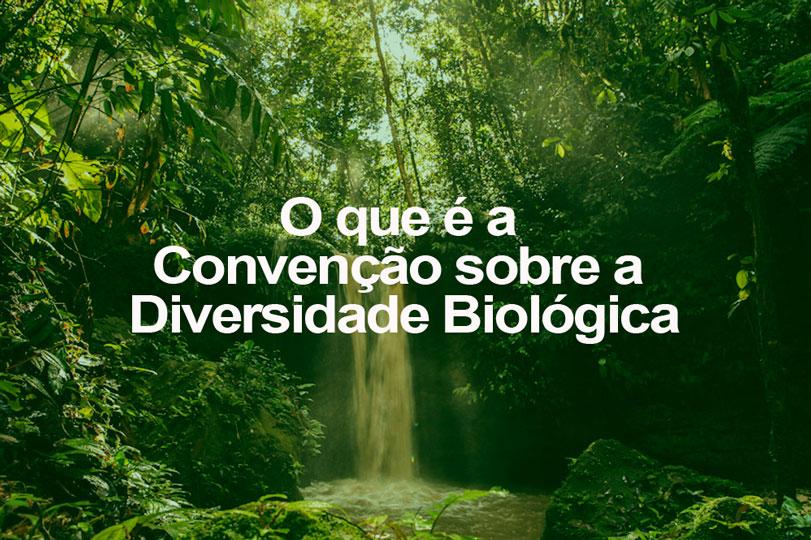 O que é a Convenção sobre a Diversidade Biológica