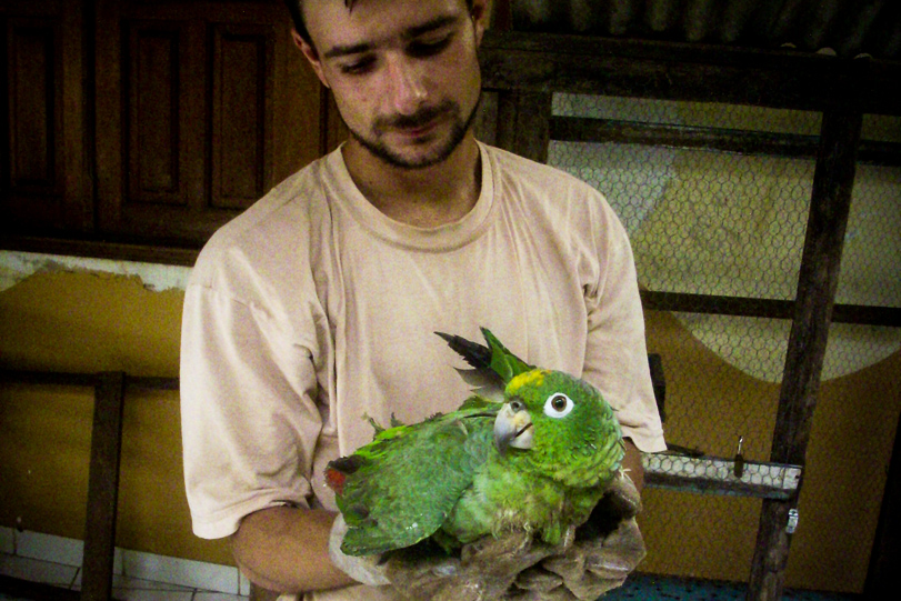 Tráfico de animais silvestres: Maldade de estimação