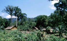 populacoes_tradicionais_biodiversidade_abertura