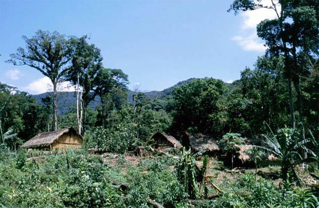 Não se preocupe, estamos aumentando a biodiversidade! Área invadida por Guaranis no Parque Estadual Intervales, em São Paulo. As árvores ao fundo dão uma idéia da floresta que foi destruída. (Foto: Fábio Olmos)