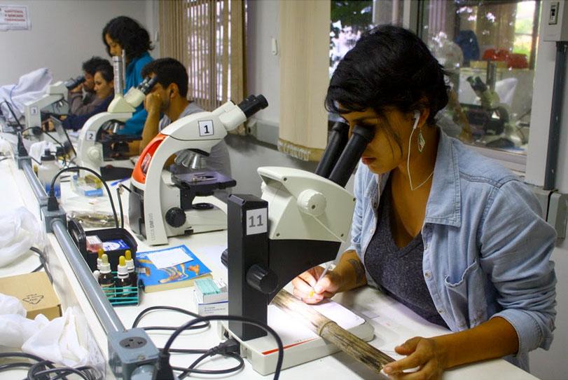 Jovens pesquisadores agitam a micologia