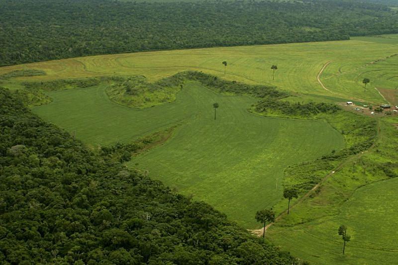 Governo tem histórico de atrasar números do desmatamento