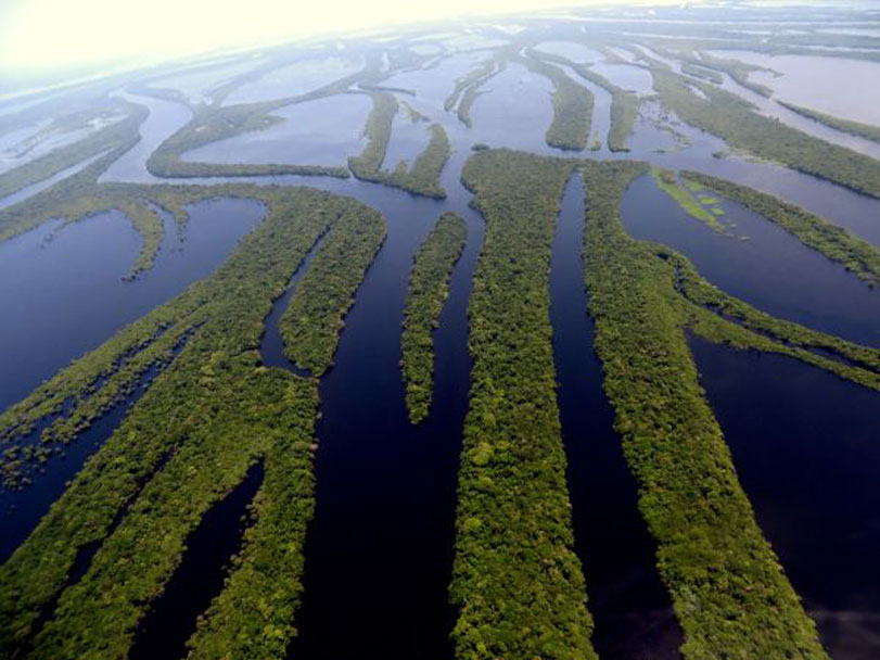 """""""Temos que zerar o desmatamento agora"""", diz Antonio Nobre"""