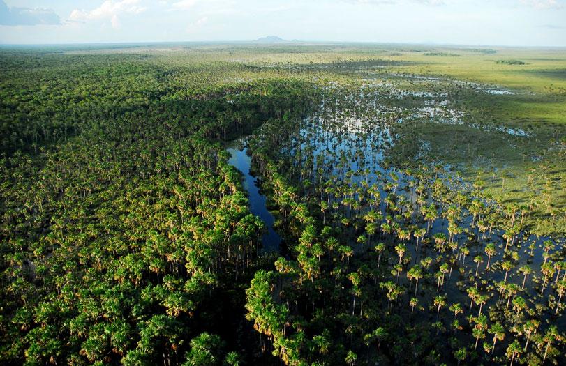 Parque Nacional do Viruá, um campeão de biodiversidade