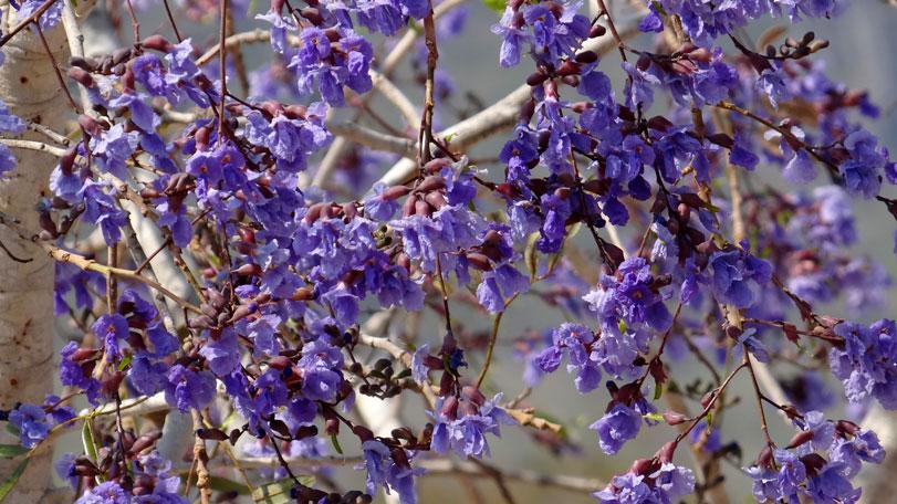 As flores improváveis e ardentes da época seca