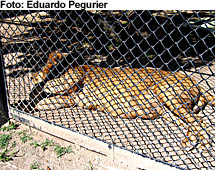 zoo_pegurier