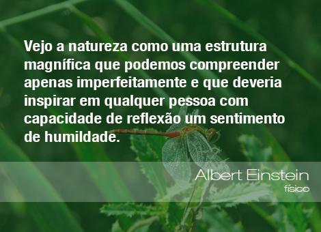 Frases Do Meio Ambiente Albert Einstein Físico 170914 Oeco