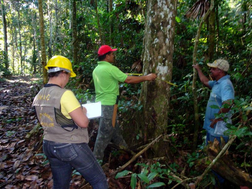 A nova definição presidencial do manejo florestal