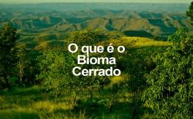 o-q-e-o-bioma-cerrado
