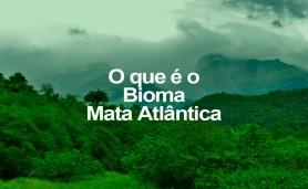o-q-e-o-bioma-mata-atlantica