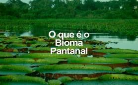 o-q-e-o-bioma-pantanal